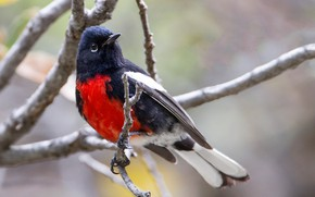 Picture bird, branch, beak, tail, gorikhvostov songster