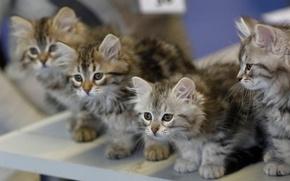Wallpaper Quartet, kittens, kids, blur