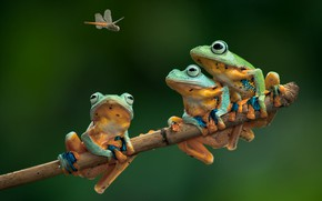 Picture branch, dragonfly, frogs, Trinity