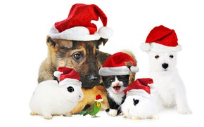 Picture cat, background, dog, rabbit, parrot, New year