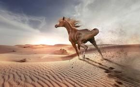 Picture sand, the sky, the sun, clouds, light, landscape, traces, nature, the dunes, horse, desert, horse, …