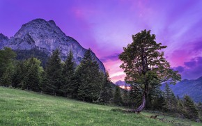 Picture trees, the sky, mountains, nature