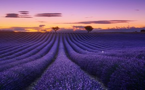 Picture field, the sky, clouds, trees, flowers, the evening, lavender