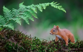 Picture nature, moss, protein, fern