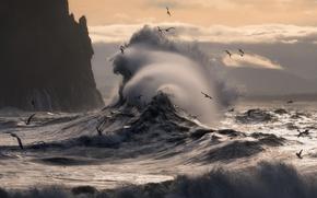 Wallpaper sea, wave, birds, rocks