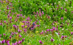 Picture Nature, Bird, Flowers, Nature, Flowers, Bird