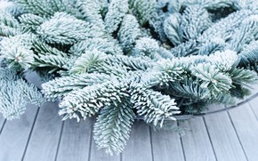 Picture frost, branches, nature, spruce, needles