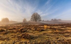 Picture field, autumn, fog, tree