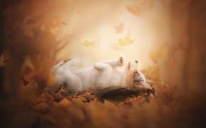 Picture autumn, leaves, puppy, bokeh, doggie, Australian shepherd, Aussie