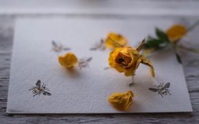 Picture Macro, Rose, Bud, Petals