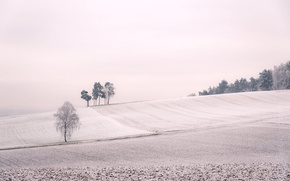 Picture winter, field, tree