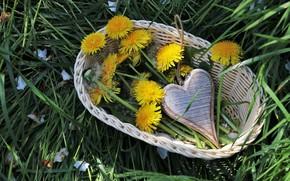 Picture dandelion, basket, Flowers, heart