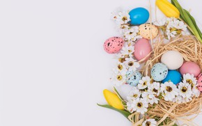 Picture flowers, chamomile, spring, Easter, pink, flowers, spring, Easter, eggs, decoration, Happy, tender, the painted eggs