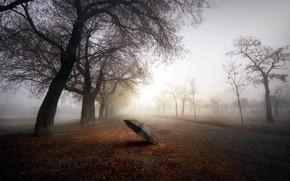 Picture road, trees, fog, umbrella