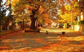 Picture Autumn, Trees, Street, Fall, Foliage, Autumn, Street, Colors, Trees, Leaves