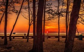 Picture trees, sunset, horizon
