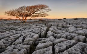Picture tree, rocks, England, The newbiggin