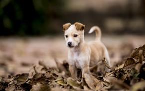 Wallpaper nature, dog, puppy