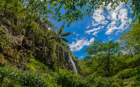 Picture greens, forest, the sky, clouds, trees, branches, rock, tropics, Palma, foliage, France, waterfall, the bushes, …