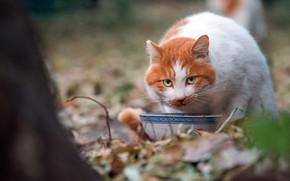 Picture autumn, cat, summer, cat, look, face, leaves, nature, Park, tree, foliage, food, cute, garden, red, …