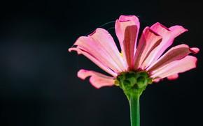 Picture flower, nature, web, petals