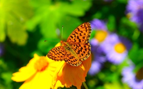Picture Macro, Spring, Butterfly, Flower, Spring, Macro, Butterfly