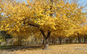Picture Autumn, Trees, Leaves, Park, Fall, Foliage, Park, Autumn, Trees, Falling leaves, Leaves