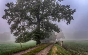 Picture road, fog, tree