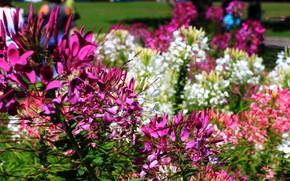Picture Flowers, Flowers, Purple flowers