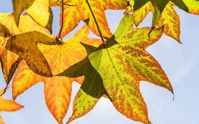 Wallpaper leaves, autumn, the sky, macro