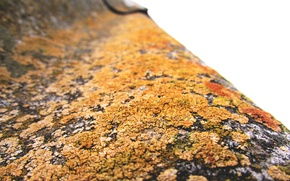 Picture roof, slate, macro, moss