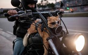 Picture Motorcycle, Brazil, Rio de Janeiro, Cat-biker, Easy rider