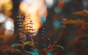 Picture nature, plant, branch, stem