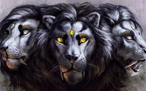 Picture eyes, Leo, mane, fangs