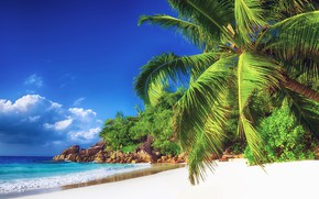 Picture sea, beach, nature, tropics, palm trees, shore, blue sky