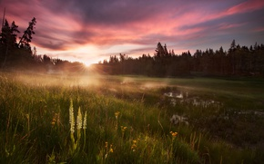Picture forest, grass, water, the sun, light, Rosa, morning