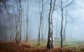 Picture fog, England, Derbyshire, Peak District