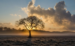 Wallpaper field, forest, the sky, the sun, clouds, fog, tree, dawn