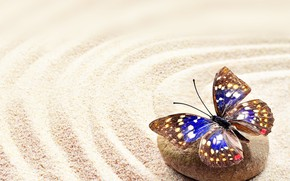 Picture sand, stones, butterfly, stone, butterfly, sand