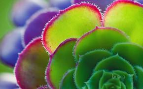 Picture flower, plant, petals, ionium
