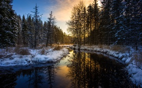 Wallpaper winter, forest, river, morning