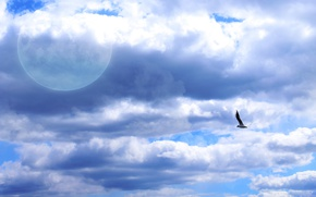 Picture bird, the moon, The sky