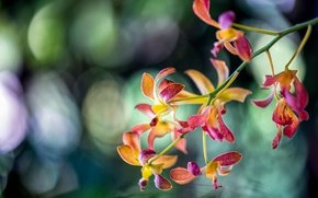 Picture branch, exotic, Orchid