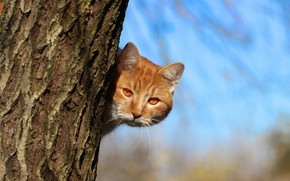 Picture cat, look, red, trunk
