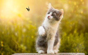 Wallpaper stone, kitty, nature, butterfly, animal, bokeh