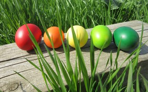 Picture grass, Easter, eggs dyed, spring 2018, meduzanol ©
