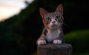 Picture cat, cat, look, background