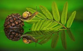 Picture water, macro, sheet, snail