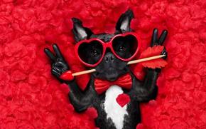 Picture dog, petals, love, rose, dog, romantic, hearts, funny, valentine, petals