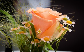 Wallpaper rose, chamomile, bouquet